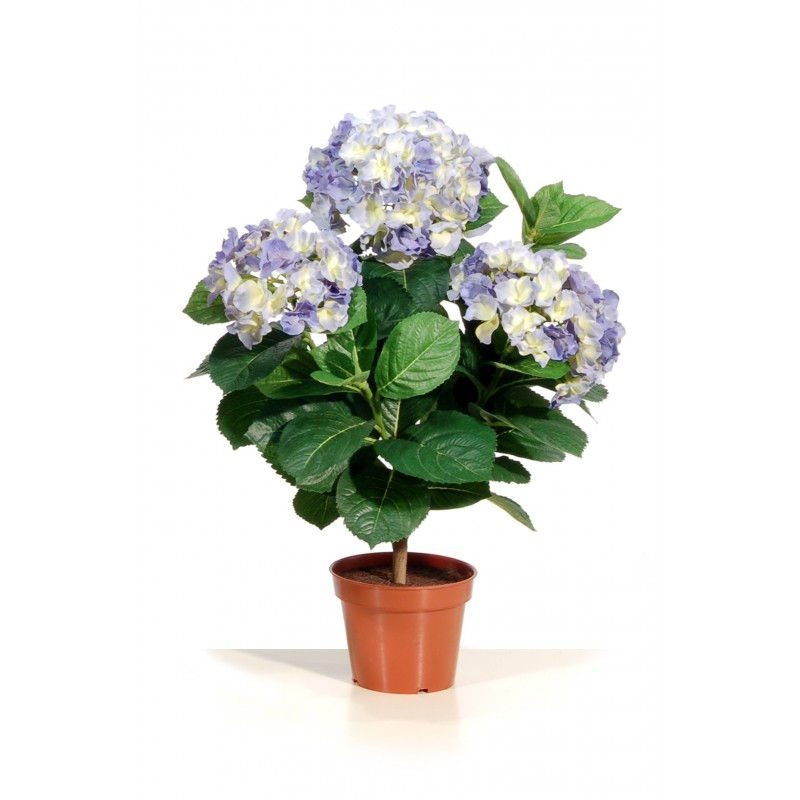 hortensia bleu en pot m tal haut 50 cm d cors du monde. Black Bedroom Furniture Sets. Home Design Ideas