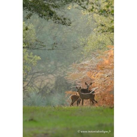 """Affiche """"L'automne à l'orée des bois"""" - papier - 60 x 80 cm"""