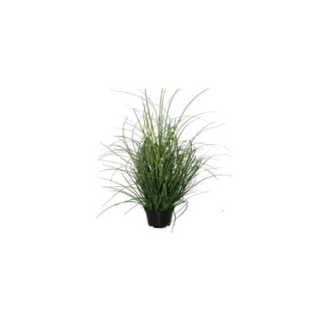 Herbes en pot 53 cm