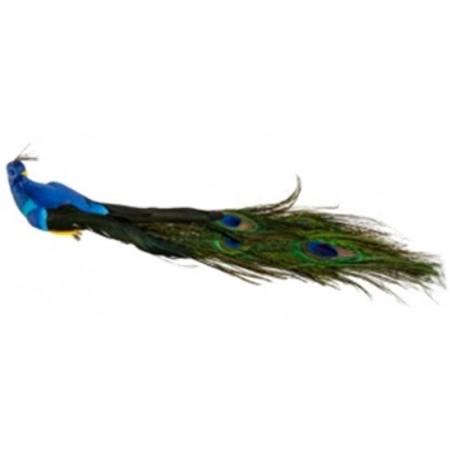 Paon bleu roi 34 x 9 x7 cm / plumes