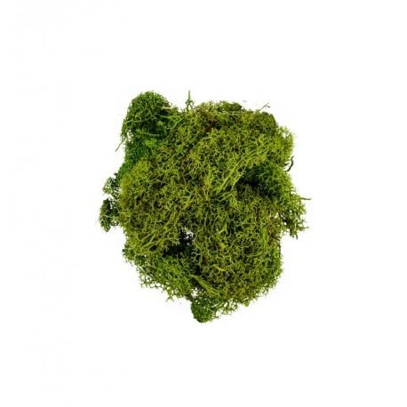 Mousse vert clair sachet de 30 grs