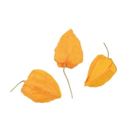 Physalis jaune (lot de 12) - papier / 5 cm