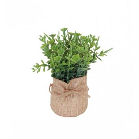 Plante verte dans pot toile de jute - Diam. 7,5 x 16 cm